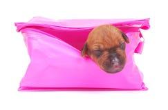 skrzynka różowa szczeniaka podróż obraz royalty free