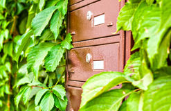 Skrzynki pocztowa na ścianie między gronowymi liśćmi Zdjęcia Royalty Free
