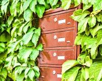 Skrzynki pocztowa na ścianie między gronowymi liśćmi Obrazy Stock