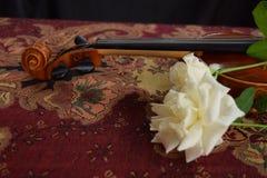 Skrzypce i biel róża na stole zdjęcie royalty free