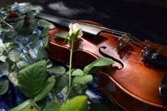 Skrzypce i rosebud na płótnie obraz stock
