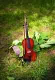 Skrzypce na zieleni i trawie opuszcza wokoło Fotografia Royalty Free