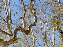 Skrzywione gałąź, płascy drzewa przeciw słońcu, zdjęcia royalty free