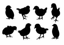 Skugga av åtta fåglar Arkivbilder