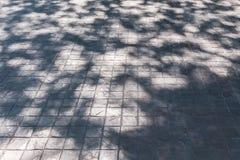 Skugga av bladträdet arkivfoto