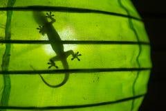 Skugga av en gecko i en grön lampa, Gili Air, Lombok, Indonesien Arkivfoton