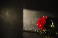 Skugga av en röd pion Royaltyfria Foton