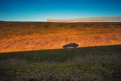 Skugga av en rörande bil på berget på solnedgången Royaltyfri Fotografi