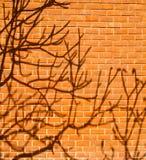 Skugga av en tree på väggen Royaltyfria Foton