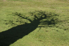 Skugga av ett boabträd Arkivfoton