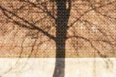 Skugga av ett skalligt träd på en vägg arkivfoton