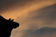 Skugga av fågeln på taket Arkivbild