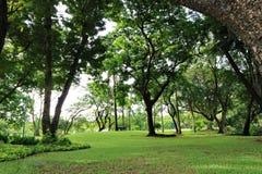 Skugga av grönska av träd i ett offentligt parkerar i Bangkok, Thailand Arkivfoto