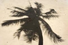 Skugga av palmträd royaltyfri foto