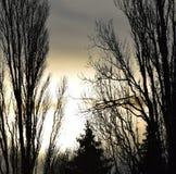 Skugga av popplar i solnedgång royaltyfri fotografi