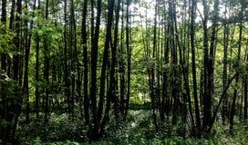 Skugga av skogen royaltyfria foton