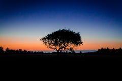 Skugga av solnedgången Arkivfoto