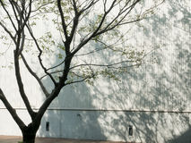 Skugga av trädet Fotografering för Bildbyråer