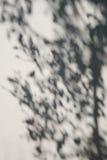 Skugga av trädet royaltyfri foto