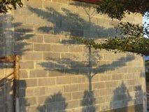 Skugga av trädet Royaltyfria Foton