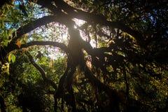 Skugga av trädet Arkivfoto