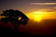 Skugga av trädkonturn till och med soluppgång royaltyfria bilder
