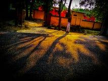 Skugga av Trees royaltyfria bilder