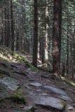 Skugga bevuxet med mossa i en bergskog av Carpathians Arkivbild
