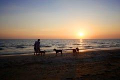 Skugga folk och hundkapplöpning på solnedgången längs stranden arkivbild