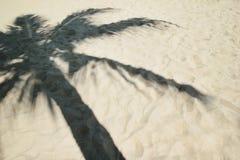 Skugga från palmträdet på en sandig strand arkivbild