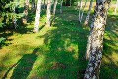 Skugga i skogen arkivfoton