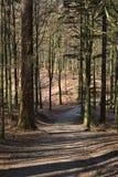 Skugga i skogen royaltyfri foto