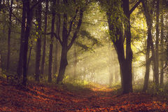 Skugga i skogen och morgonljuset med dimma under höst Arkivbild
