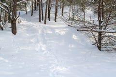 Skugga i vit, milt insnöat vinterskogen royaltyfri bild