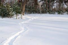Skugga i vit, milt insnöat vinterskogen royaltyfria foton