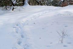 Skugga i vit, milt insnöat vinterskogen royaltyfri foto