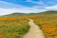 Skugga på kullarna av antilopdalen Kalifornien Poppy Reserve under blommande tid Fotografering för Bildbyråer