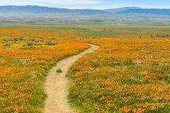 Skugga på kullarna av antilopdalen Kalifornien Poppy Reserve under blommande tid Royaltyfri Bild