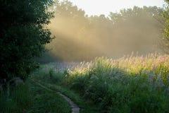 Skugga på soluppgång i sommar med strålar av ljus arkivfoto