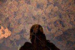 Skugga på vattnet Royaltyfria Bilder