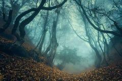 Skugga till och med en mystisk mörk gammal skog i dimma Höst royaltyfri bild