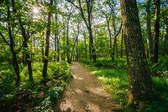 Skugga till och med en skog, i den Shenandoah nationalparken, Virginia Arkivfoton