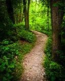 Skugga till och med frodig grön skog i den Codorus delstatsparken, Pennsylva Royaltyfri Fotografi