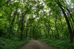 Skugga till och med skogen i Cheilen Turzii, Rumänien arkivfoton