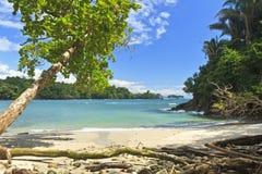 Skugga treen på Playa Manuel Antonio arkivfoton