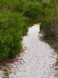 Skugga vitsanden, trä, sanddyner Arkivbilder
