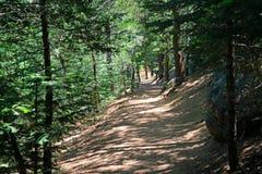 Skuggad skogbana arkivbild