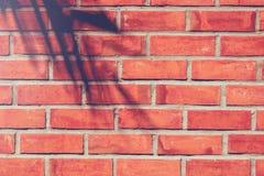 Skuggakokosnöten lämnar på väggen för röd tegelsten förutom som bygger royaltyfri bild