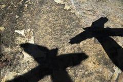 Skuggan av fågel två Arkivfoton
