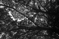 Skuggan av trädet Royaltyfri Fotografi